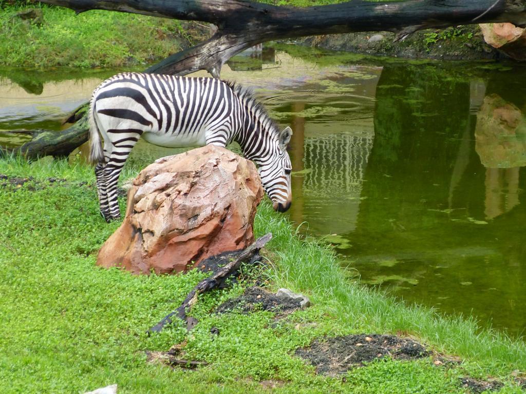 photo Zebra200.jpg