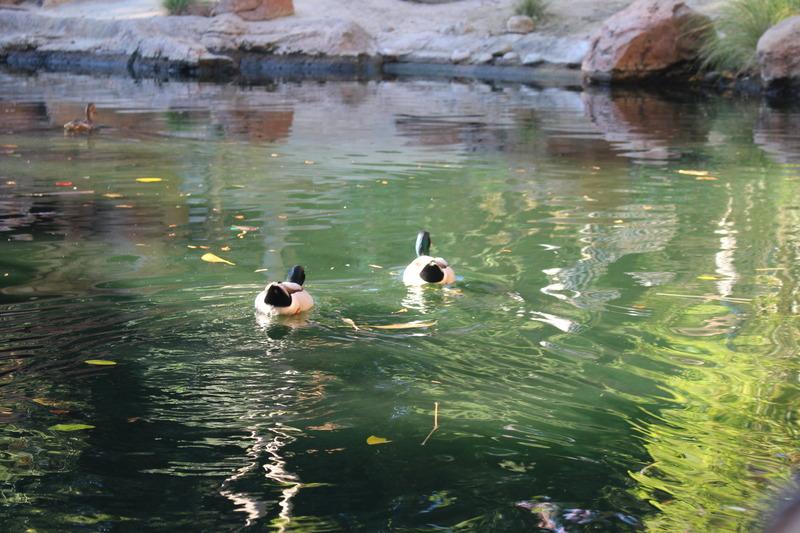 photo ducks 2 272.jpg