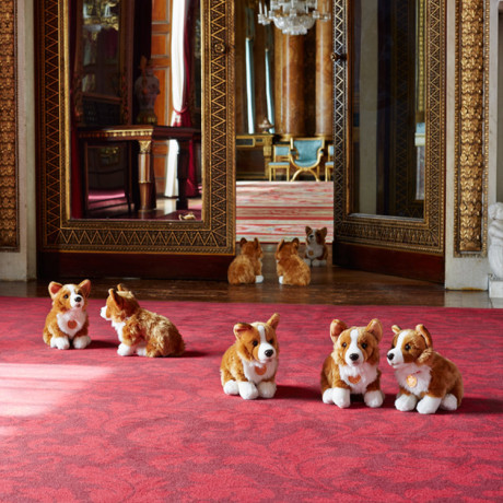 photo corgi_zpsuc9axcas.jpg